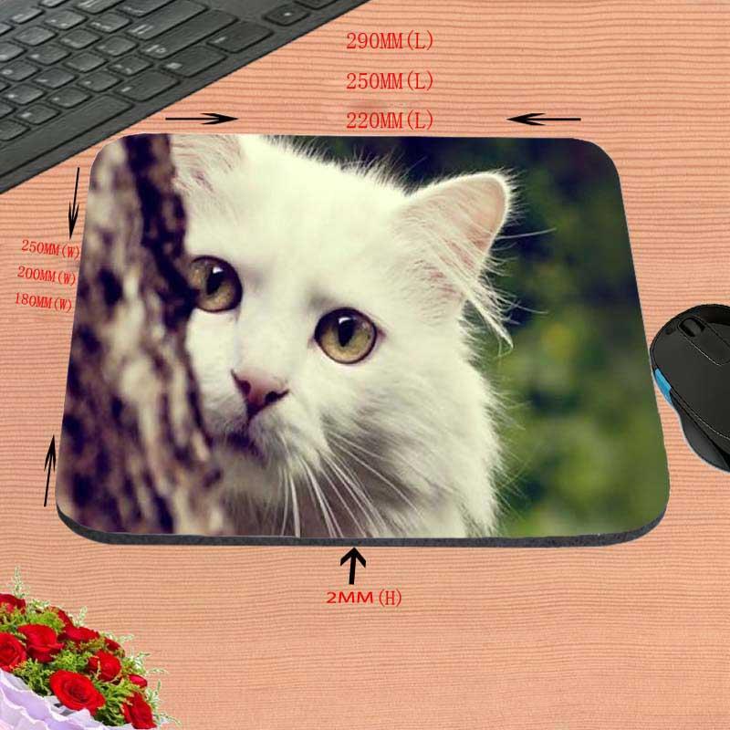 Gatos lindos Backgroun blanco de la nueva llegada de la alta calidad - Periféricos de la computadora - foto 3