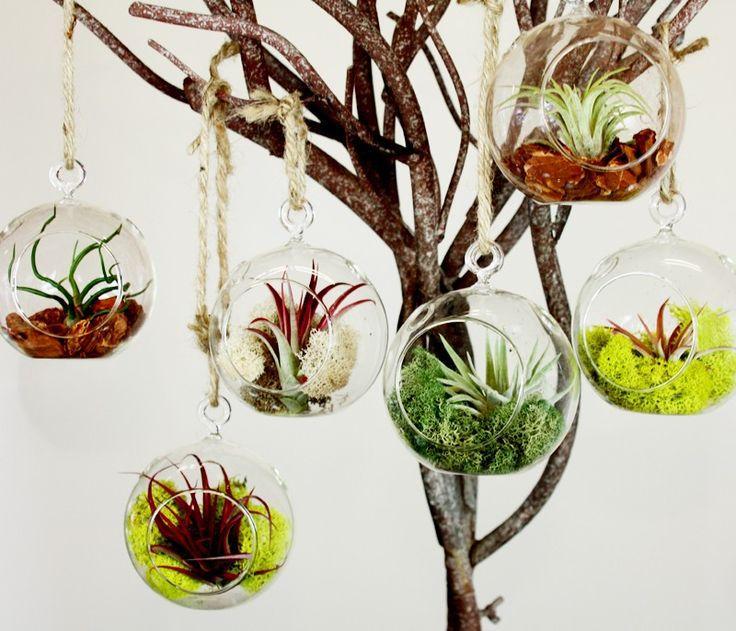 6PCS/Set Hanging Air Plant Holder, 10CM Globe Terrariums,4.5 inch Indoor  Garden Planters,6 inch DIY Terrarium-in Flower Pots & Planters from Home &  Garden ...