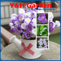 Flower Seeds Potted Seeds 4000 PCS Lily Of The Valley Of The Flower Seeds Family Garden