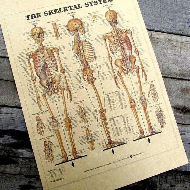 Vintage humano sistema esquelético diagrama cartel bar Decoración ...
