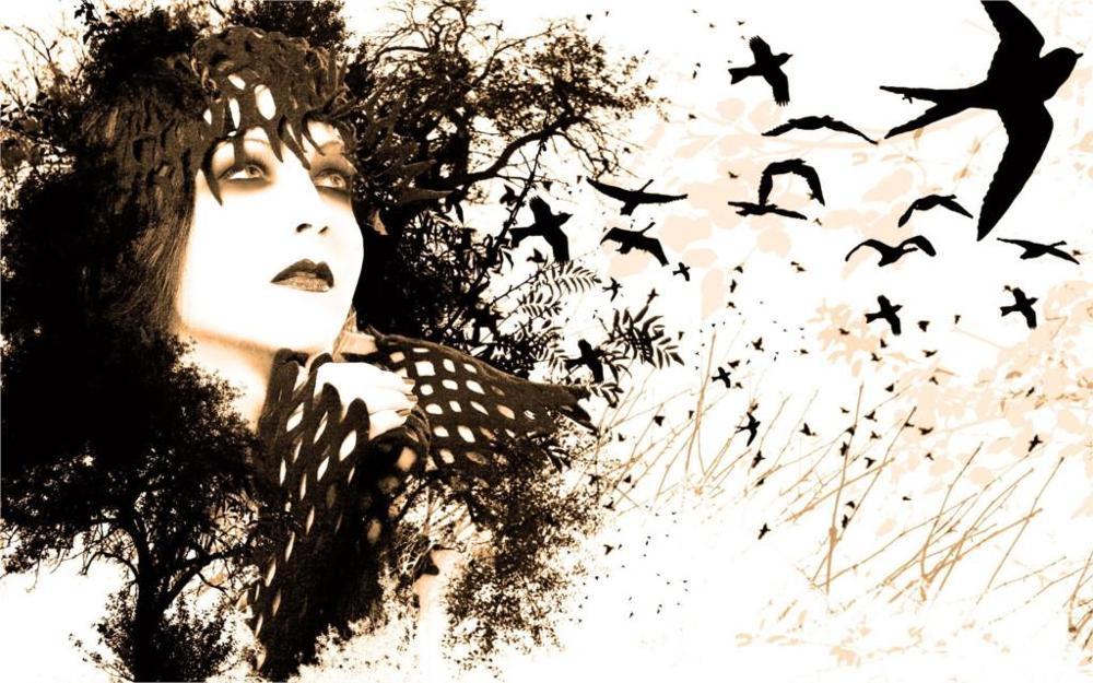 1257 6 De Réductionfemmes Yeux Noir Blanc Oiseaux Peinture Dessins Fond Blanc 4 Tailles Soie Tissu Toile Affiche Imprimer In Peinture Et