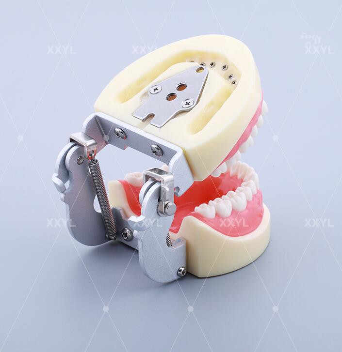 Clareador歯科ラボps4歯医者機器包括的な病態モデルの下顎歯研究モデル用指導