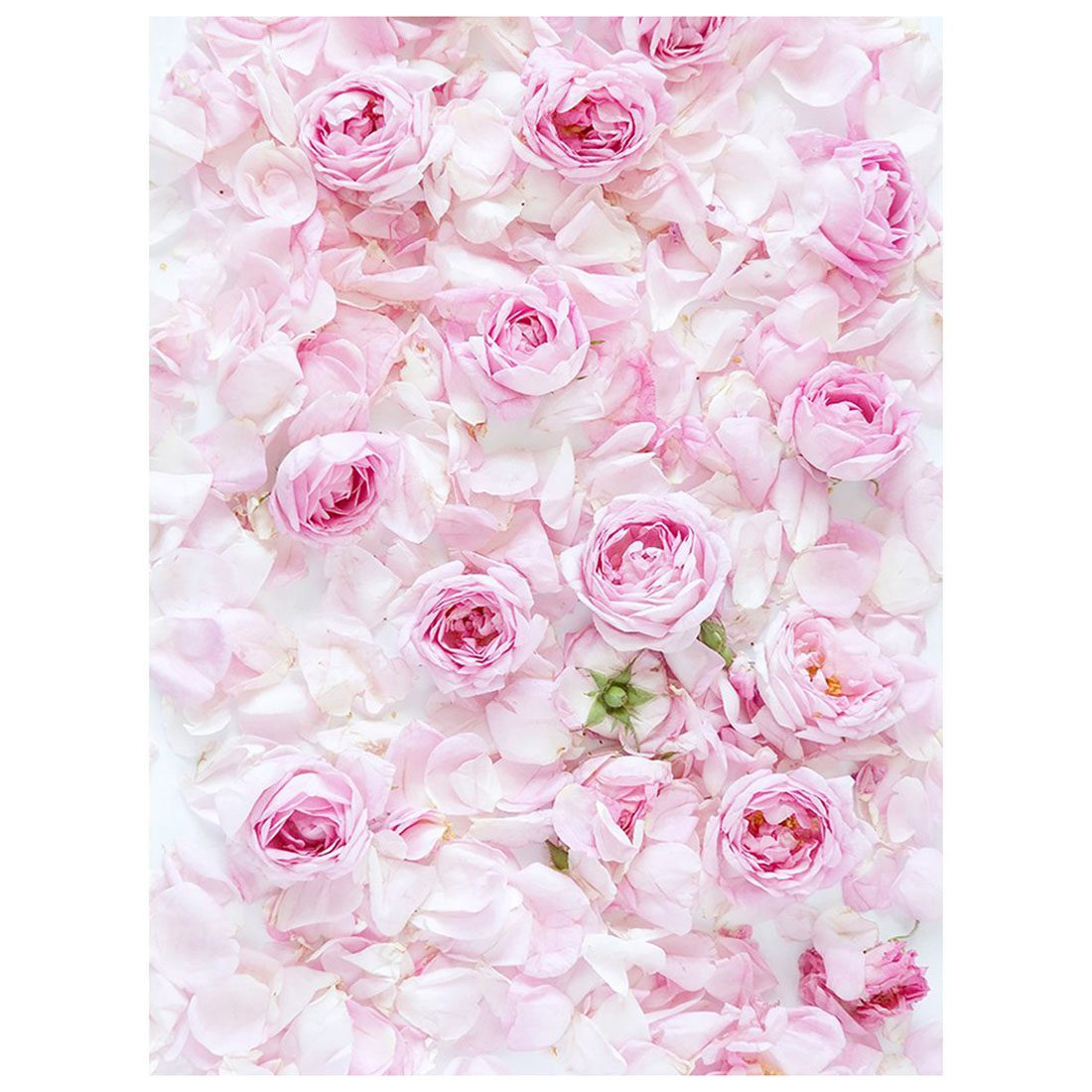 5x7ft Photography Backdrop Pink rose flower wall wedding love baby shower fresh background props photocall