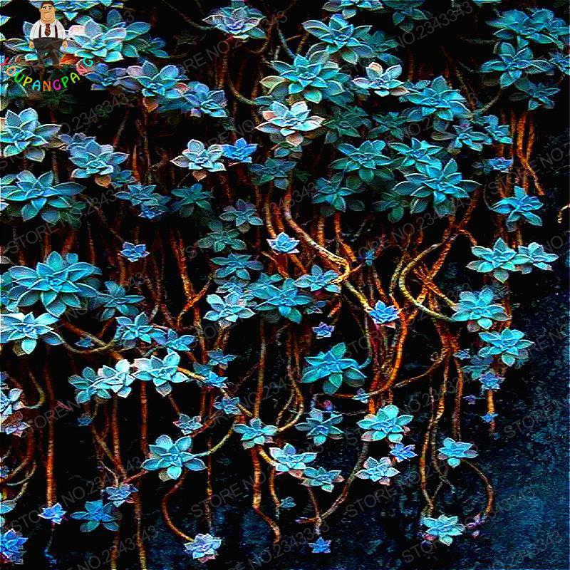 Rare Climbing Succulents Seeds Tohum New Plants Seed For Home Garden Diy Plant Rare Lithops Bonsai Flower Semillas 100pcs / Bag
