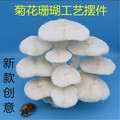 Large conch shells of white coral mushroom bonsai natural coral boutique decoration process