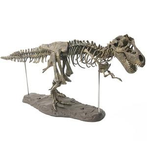 Image 5 - 4D Animal Model Toys Simulation Large Dinosaur Fossil Tyrannosaurus Assemble the skeleton model Toys Home Decoration