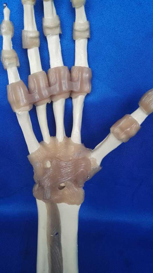 1:1 tamaño natural humana mano esqueleto articulaciones modelo enseñanza medicina anatómico modelo anatomía mano humana esqueleto con ligamento