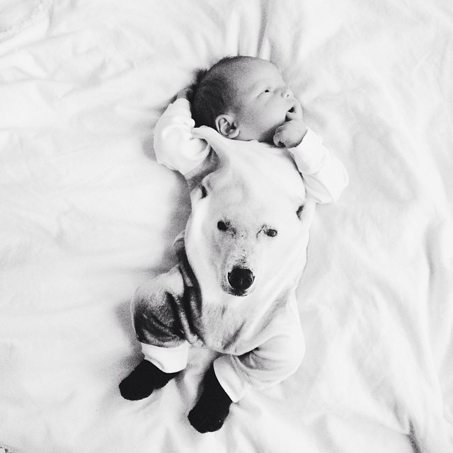 2017 Autumn baby boy clothes cute white Dog pattern baby ...