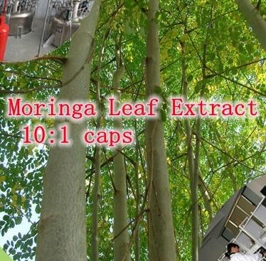 Moringa Leaf Extract Powder 10:1 caps rich of Vitamins, amino acids and minerals 500mg x 300pcs free shipping