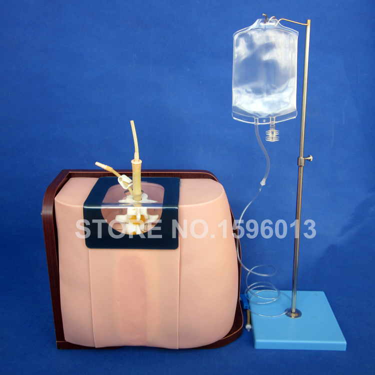 Lumbar Puncture Simulator model, Vertebral Puncture Model,Spinal Puncture model lumbar puncture simulator model vertebral puncture model spinal puncture model