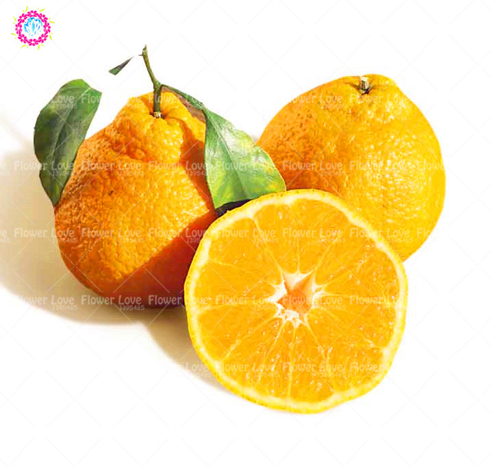 Giant Ugly Orange Seeds Super Sweet Organic Fruit Seeds Top Quality Outdoor Tree Seeds Garden Perennial Plants 20PCS /Bag