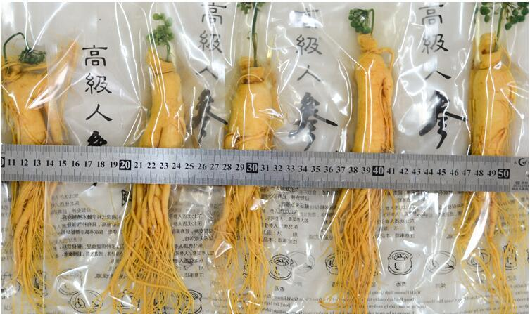 Changbai Fresh Ginseng Root 150g top Grade Vacuum Pack Panax ginseng Root 8 Years Old Herbal skin care beauty use 1