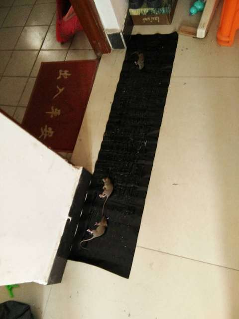 200cm*40cm Rat Trap Glue Mouse Trap Terminator Harmless Insect Traps for Pest Reject Pest Control Rat Killer Repeller