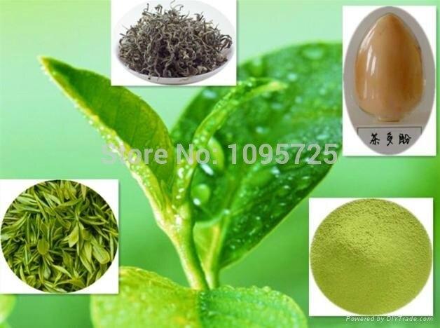 Green Tea Extract powder 60%TP