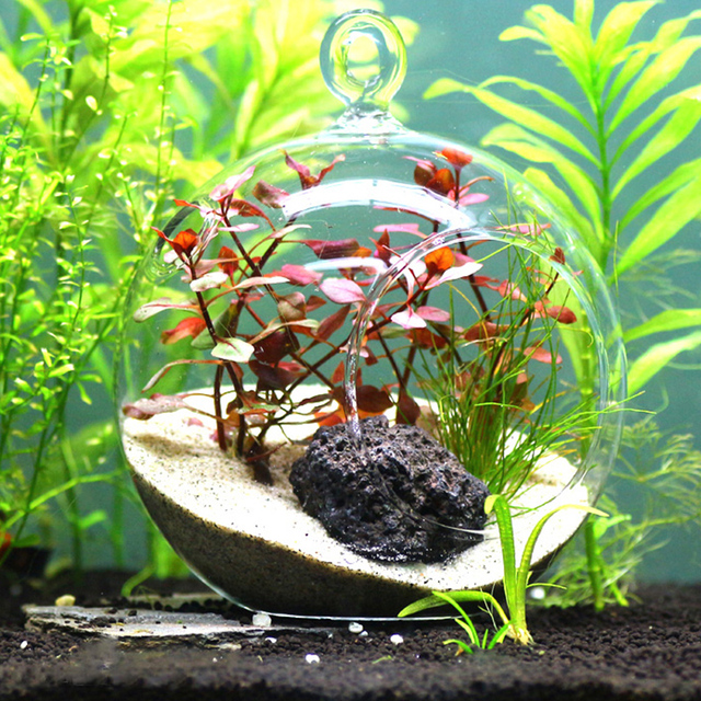 aquarium wasserpflanzen micro landschaft glaskugel f r aquarium garnelen tank gras tank. Black Bedroom Furniture Sets. Home Design Ideas