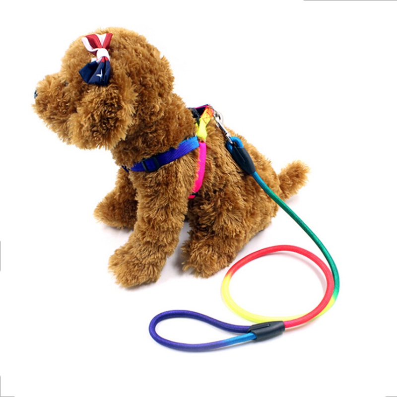 Nylon Pet Dog Leashes Traction Rope and Harnesss for Puppy Training Belt Dog Walking Leads Leashes S/M/L Rainbow Color Hot Sale