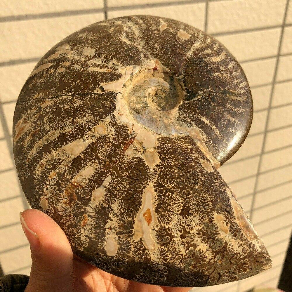950G Intero Naturale Ammonite Fossil Conch Cristallo del Campione di Guarigione950G Intero Naturale Ammonite Fossil Conch Cristallo del Campione di Guarigione