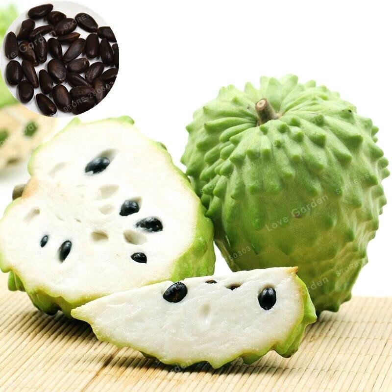 5 шт. Soursop фрукты (Graviola Annona муриката) сладоп бонса вкусные фрукты бонса сахар яблока аннона дерево бонса растение в бонсай