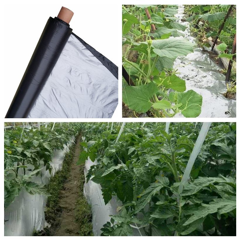 50m 0.012mm Orchard Fruit Tree Silver-Black Plastic Film Garden Greenhouse Reflective Weed Control Silvery Black Mulch Film