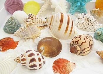 070651 conch shell package fish tank aquarium landscaping DIY material floor suite home decoration free shipping