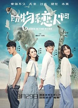 《动物系恋人啊》2018年中国大陆爱情电视剧在线观看