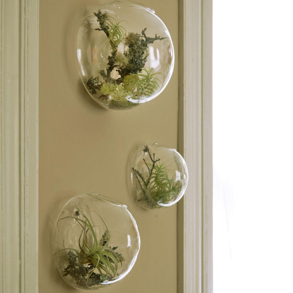 Glass Bubble Air Plant Wall