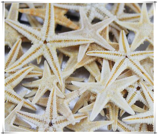 100pcs/lot Natural Artificial Starfish Platform Ornament Accessories wedding decoration 2cm/4cm size for choosing