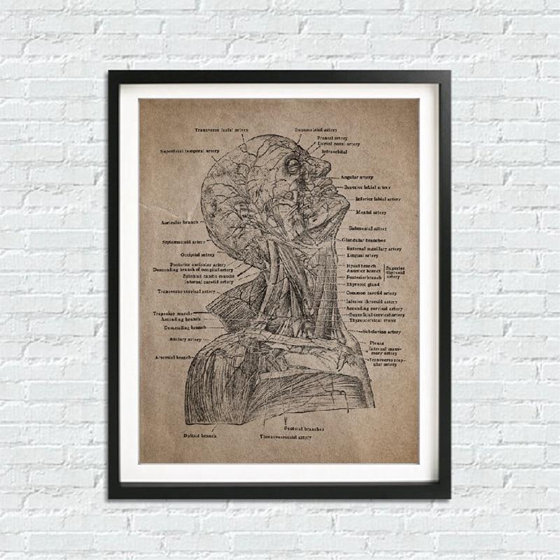 Human Anatomy Canvas Prints