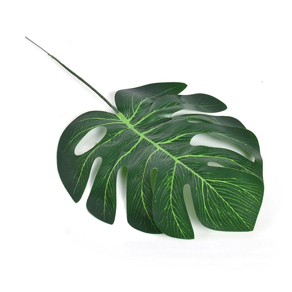картинки листков домашних растений