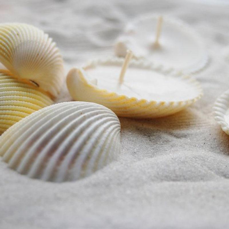 Free Shipping(12 Pcs/lot)Natural Lion Shell Aromatherapy Candle For Wedding Decor Coastal Home Decor Craft Seashells