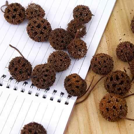 10 stks/zak woninginrichting art gedroogde bloemen gedroogd fruit kleine verse zachte Natuurlijke gedroogde bloemen DIY Foto Schieten Props