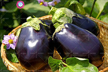 11.11 Big Promotion!100 pcs/lot giant purple eggplant seeds green vegetable seed garden&home organic herb plant