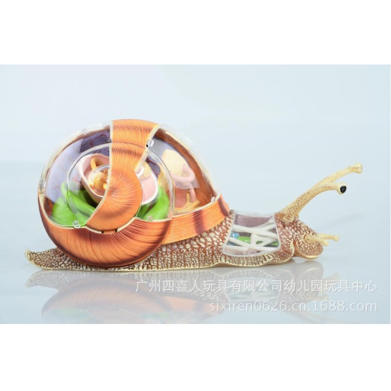 Assembled Animal Anatomy Snail Model Anime Medical Science Anatomic ...