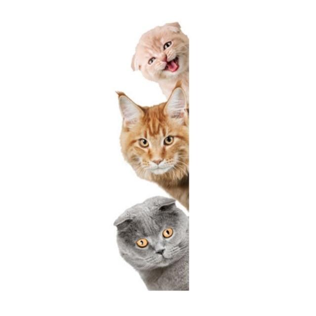 Unduh 64+  Gambar Hewan Kucing Lucu Paling Bagus