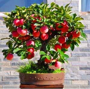 яблоки купить