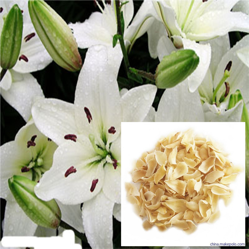 Hot Sale High Quality Lily Dry 250g-1000g Sulfur Free Fresh Lily Dry, Fresh Lily Dry, Naturally Dried, No Additive Dried Lily