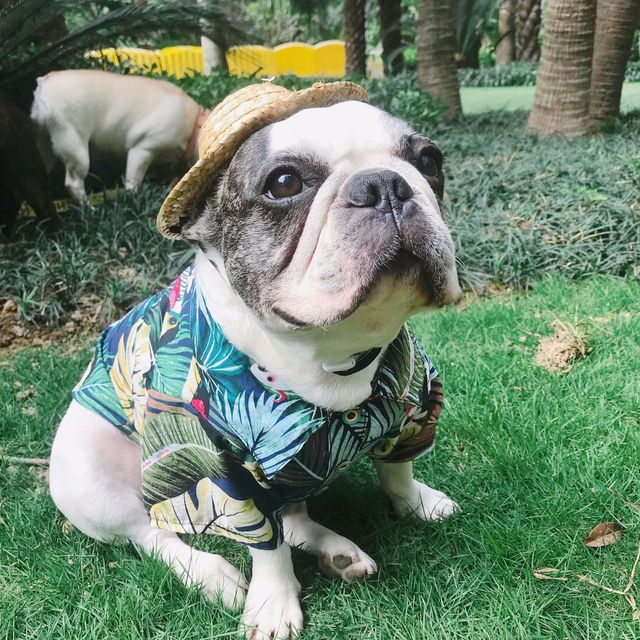 Image result for dogs in spring fashions