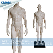 CMAM-PRC47 White PU Quality 1:6 Male 30cm Sculpture Medical Skull Head Artist Model