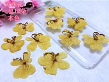 120pcs Pressed Dried Cassia Surattensis Burm Flowers Plants Herbarium For Jewelry iPhone Phone Case Frame Making Accessories