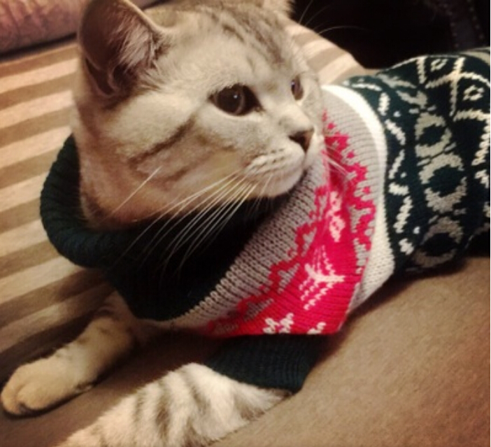 New Snowflower Warm Knitwear Cat Sweater Pet Jumper Coat For Small Puppy Dogs Cat Christmas Xmas