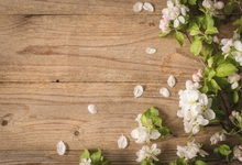 Laeacco Old Wooden Board Texture Flowers Petals Baby Photography Backgrounds Customized Photographic Backdrops For Photo Studio