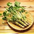 200 pçs/lote Wasabi Sementes, Rábano japonês Sementes de Produtos Hortícolas para o plantio fácil para crescer Planta Bonsai DIY Início Jardim das Plantas