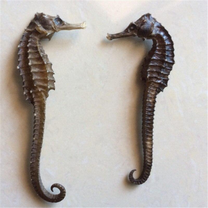 6- 8 Cm Natural Hippocampus Specimens