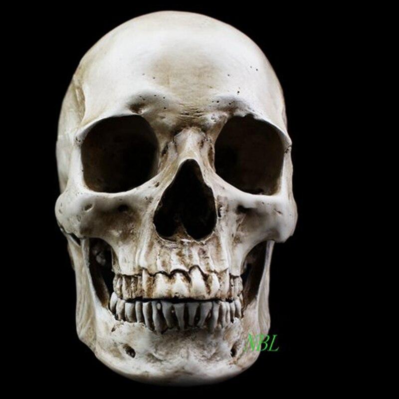 Human Natural Head Skull Model High Simulation 1 1 Skeleton White Medical Human Skull Model Still
