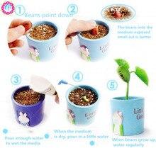 3 pcs/bag Magic Beans seeds Artifact green bonsai plant seeds vegetable&fruit potted seeds home garden supplies free shipping