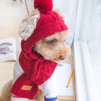 Luksusowe Knitting Pet czapki szalik zima akcesoria do pielęgnacji zestawy czerwony czarny szary bawełna koty artykuły dla psów dla Chihuahua Yorkshire tanie i dobre opinie Best Baby 100 bawełna Paski accessories for dogs Cotton Red Gray Black Hat Scarf Pure Color Winter Autumn Spring Fall