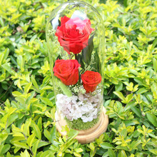 The Beautiful Glass Cover Fresh Preserved Rose Flower  For Wedding party Decoration DIY Craft  Flowers 3 Color