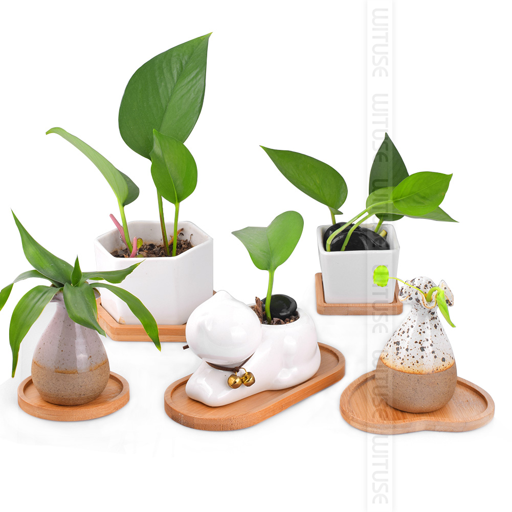 Image 4 - 2PCS/Lot Concise Style Flower Boxes Saucer Ceramic Succulent Plant Pots Bamboo Stand-in Pot Trays from Home & Garden