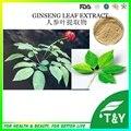 100% натуральный растительный экстракт сибирского женьшеня лист горячей продажи 100 г/лот