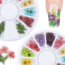 New 24PCS/Wheel Nail Art Decoration Dried Flower 3D Manicure Polish Summer Real Preserved Floral Leaf Mixed Dry Bloom Tips